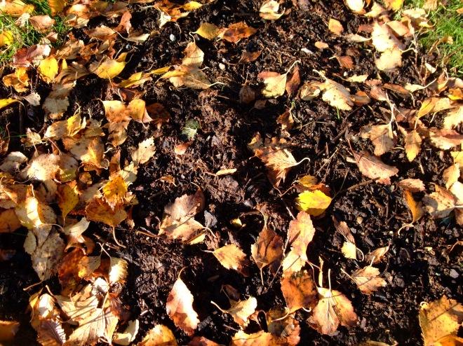 Høstblader i jord, Blader i jord, Høst