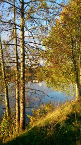 Høst, Bjørk, Stokkalandsvannet
