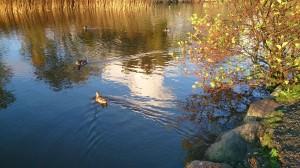 Stokkalandsvannet, Ender, Høst