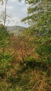 Høst, Høstbilde, Ganddal, Bogafjell